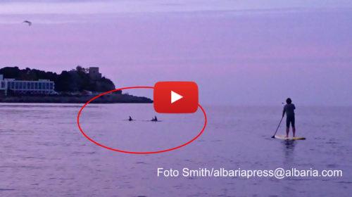 Palermo, spettacolare incontro con un branco di Delfini sul Golfo di Mondello |FOTO E VIDEO