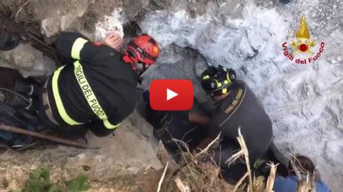 Palermo, i vigili del fuoco salvano un cane finito in una cavità rocciosa |VIDEO