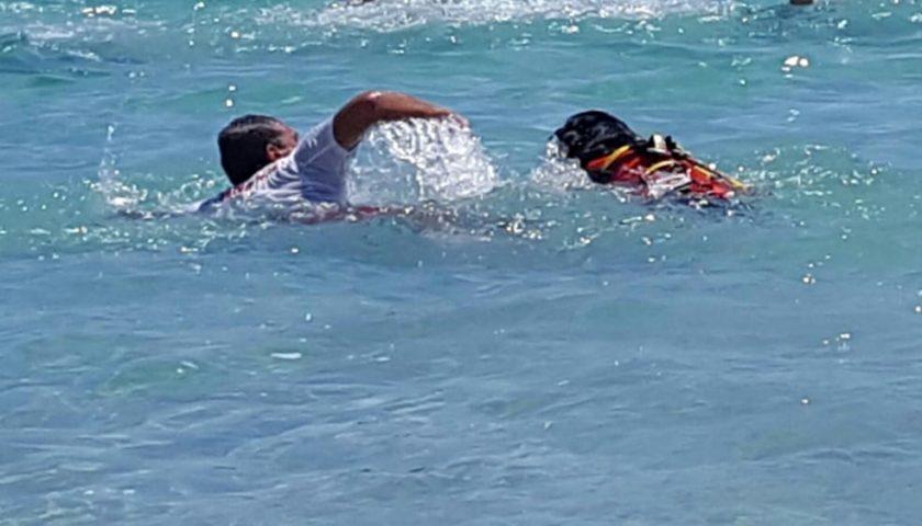 Mondello, donna rischia di annegare: il cane-bagnino Otto la salva