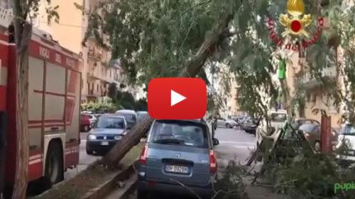 Violenti venti di scirocco sferzano Palermo, diversi gli alberi caduti – IL VIDEO