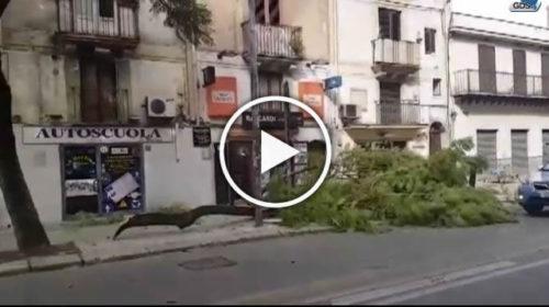 Cade un albero in Corso Tukory e colpisce un passante: IL VIDEO dell'incidente 🎥
