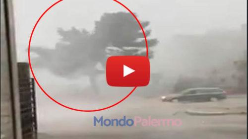 Riprende la bufera di pioggia e fulmini e il fortissimo vento abbatte un albero 🎥 Impressionante VIDEO
