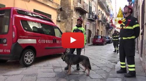Crolla palazzina a Ballarò a Palermo, intervento dei vigili del fuoco 🎥 VIDEO