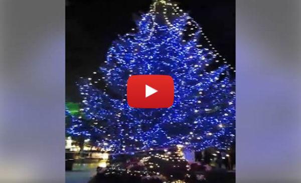 Palermo, Ecco il grande albero di Natale tutto Illuminato 🌲 VIDEO 🎥