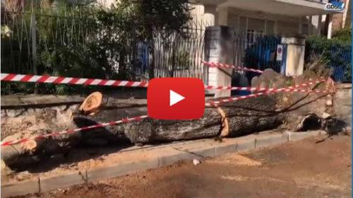 Maltempo a Palermo, così è crollato un albero a Mondello – VIDEO 🎥