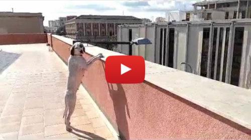 Cane salvato sull'autostrada Palermo-Mazara del Vallo, la Polstrada l'arruola 🎥 VIDEO