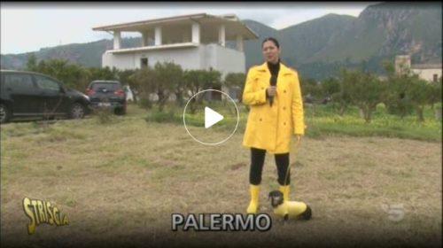 Striscia, torna a Palermo la produzione del mandarino: con marmellate e altri prodotti tipici 📺 VIDEO