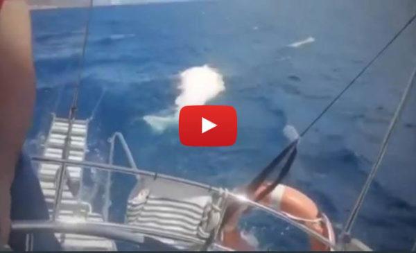 Avvistato altro capodoglio morto nel golfo di Palermo, le immagini girate da una barca 🎥 VIDEO