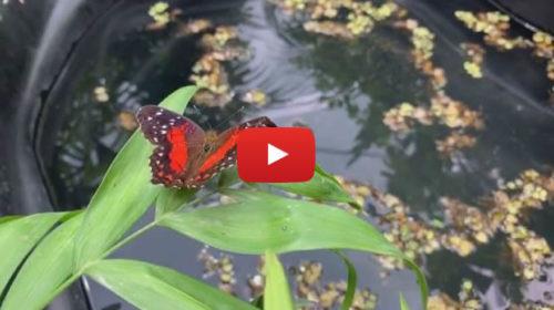 Casa delle Farfalle, c'è tempo fino al 15 luglio per visitarla e immergersi in un mondo incantato 🦋 VIDEO