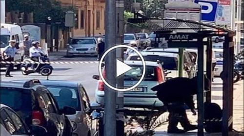 Zaino abbandonato alla fermata del bus, all'Arenella scatta l'allarme bomba 🎥 VIDEO
