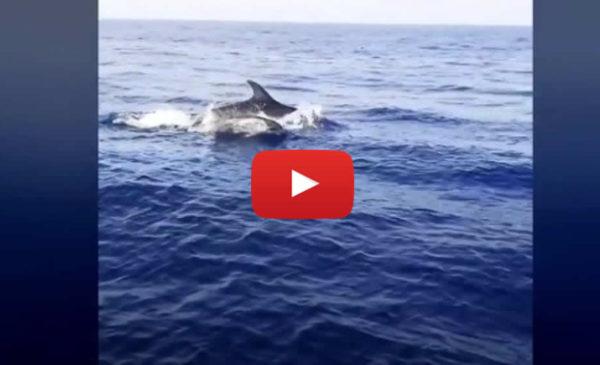 Sole, mare e… delfini: spettacolo nel mare dell'Addaura | IL VIDEO 📹