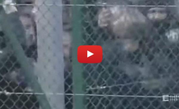 Rissa tra tifosi rosanero al termine del primo tempo: le immagini 🎥 VIDEO