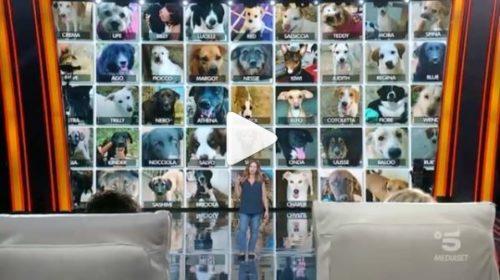 Tu si que vales, La siciliana Chiara e i suoi cuccioli commuovono i giudici 📺 VIDEO