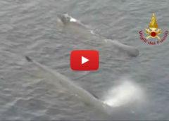 Stretto chiuso per Pasqua, a passare ora sono i Capodogli: le spettacolari immagini dall'elicottero   VIDEO 📹