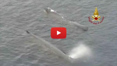 Stretto chiuso per Pasqua, a passare ora sono i Capodogli: le spettacolari immagini dall'elicottero | VIDEO 📹