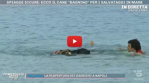 """""""Pomeriggio 5"""" in diretta da Mondello: ecco la simulazione con i cani """"bagnini"""" 📺 VIDEO"""