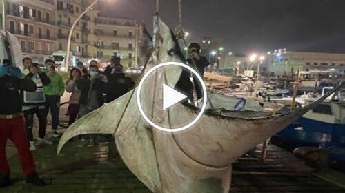 Trovata una manta da 450 chili nel porticciolo della Cala a Palermo – VIDEO