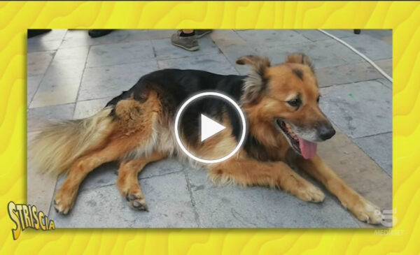 La Storia di Whisky a Striscia la Notizia, il cane diventato una star a Carini – VIDEO